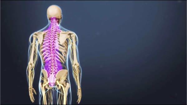 anatomie du dos espace francilien du rachis clinique du rachis versailles paris 1