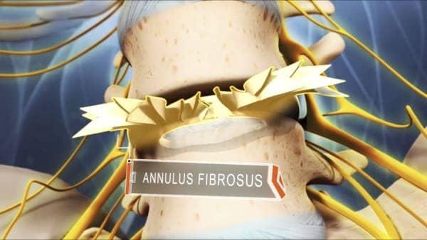 anatomie du dos espace francilien du rachis clinique du rachis versailles paris 4