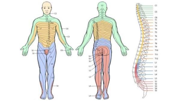 sciatique traitement la sciatique dos cruralgie symptomes une cruralgie traitements cruralgie que faire espace francilien du rachis clinique du rachis versailles paris 2